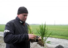 CROPS WATCH: Some winter barley crops stressed…T2 due