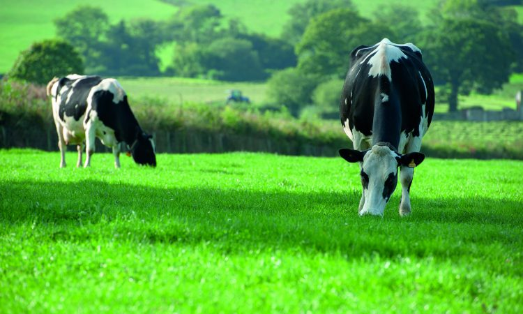 5 signs to help detect SARA in your herd