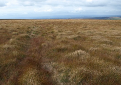 €130,000 funding approved for raised bog conservation