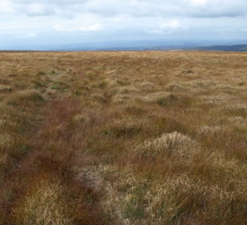 FarmPEAT: €1.2m project aimed at land around raised bogs