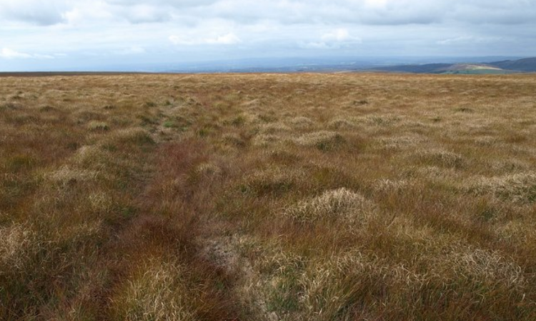 €12.4 million bog conservation project delayed by Covid-19