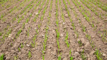 Aphids; grass weeds; costs; cover crops…National Tillage Conference 2020