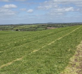 Silage: Are you planning on a third cut this year?