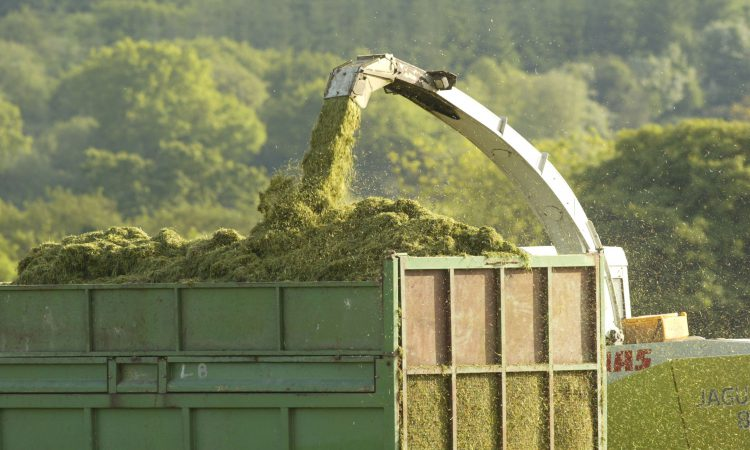 'Extra vigilance' needed during silage period – ICMSA