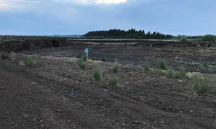 Commission announces projects for blanket bogs and water quality