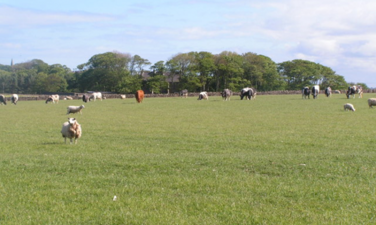 Only 18% of Irish cattle farms are deemed 'viable' – new report