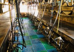 Pics: Parlour equipment on sale at farm retirement auction