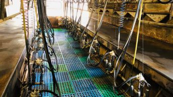 Carbery reveals price for August milk