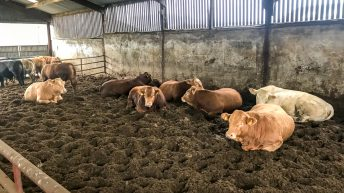 Beef focus: Finishing under 16-month bulls along with steers and heifers in Co. Kilkenny