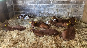 Comparisons between calf breeds and prices in Co. Louth