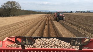 全国马铃薯日:消费者呼吁支持马铃薯种植者