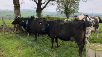 Dairy focus: Monocultures and above-average grass growth in Co. Tyrone