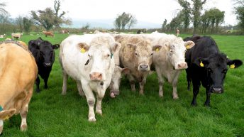 ICSA to host meeting in Monaghan amidst mounting TB concerns