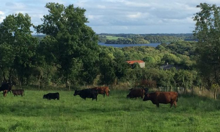 Roscommon couple build on organic farm brand