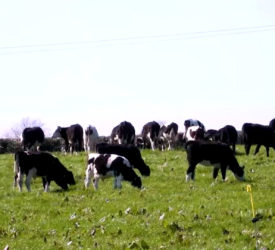 Teagasc Green Acres farm profit improves in 2020