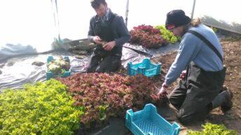 Growing an organic vegetable enterprise on 5ac