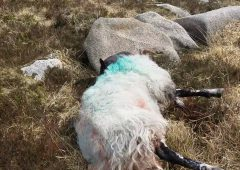 Graphic: Stark reminder of dangers posed by dogs off leads