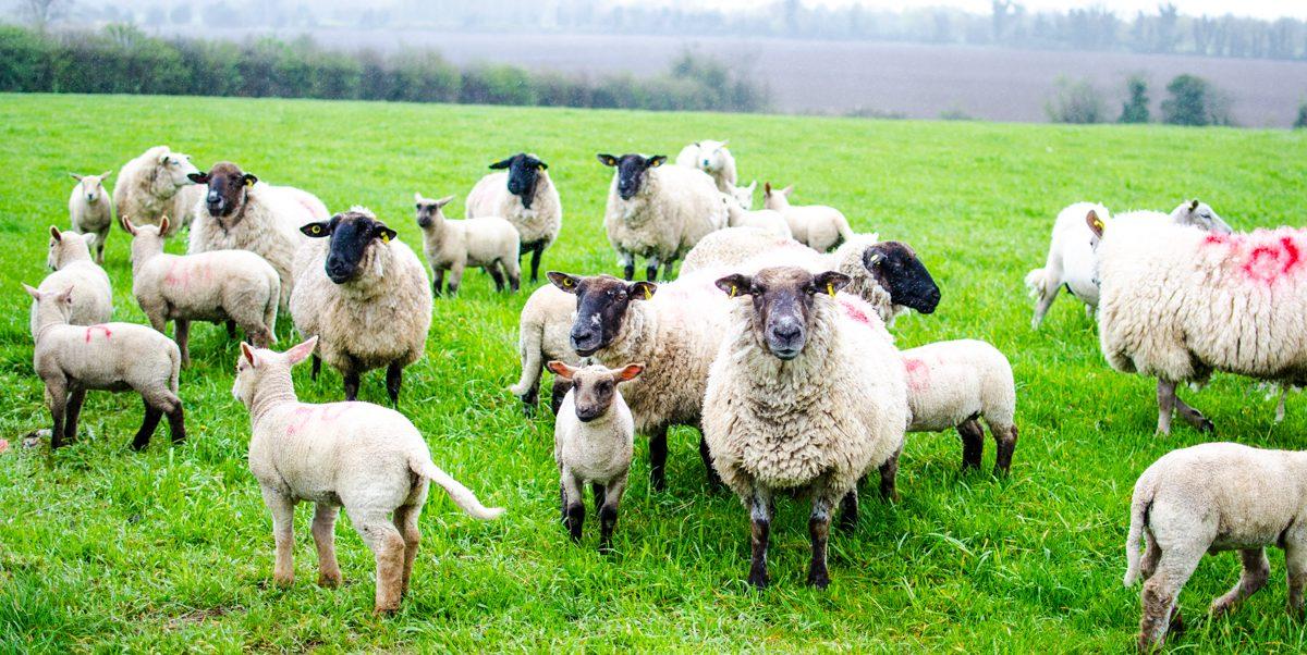 Improving flock performance and returns: Farm walk on next week