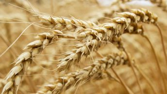5-year grain outlook shows consumption continues to outstrip demand