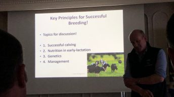 Key principles for successful dairy cattle breeding