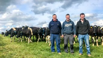 Band of brothers: Why this beef farmer influenced his dairy siblings on sire selection