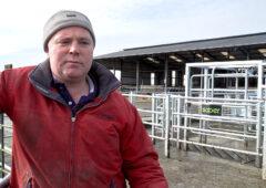 这家公司怎么样?基尔肯尼奶牛场的农betway客户端场主让他成长中的125头牛群更容易管理。