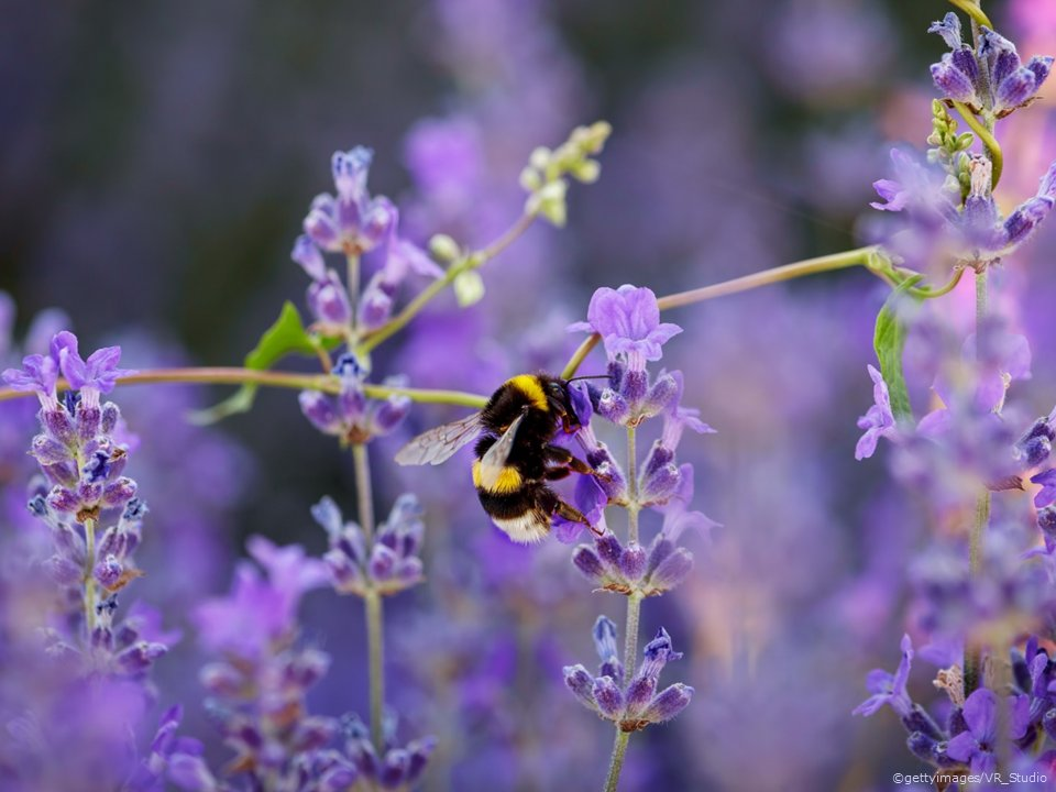 €1.35 million to be made available to local authorities for biodiversity projects