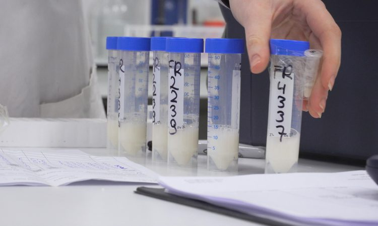 Dairy focus: Video reveals the ins and outs of fresh semen