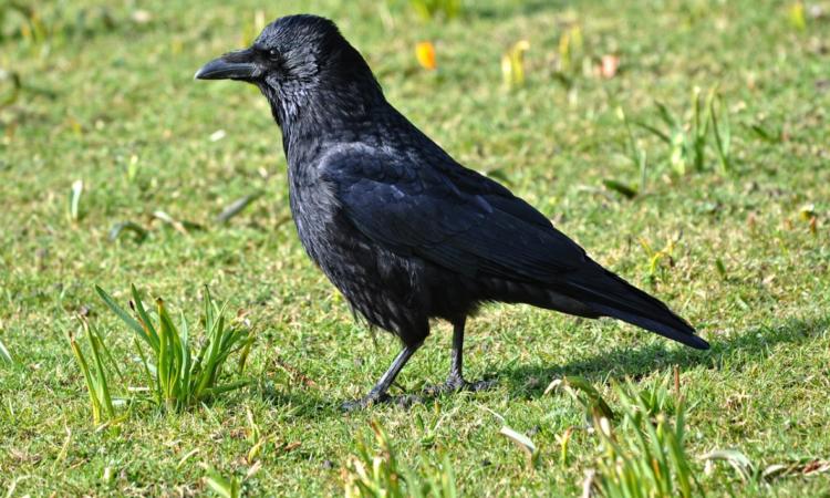 Can farmers get a 'derogation' on wild bird control?