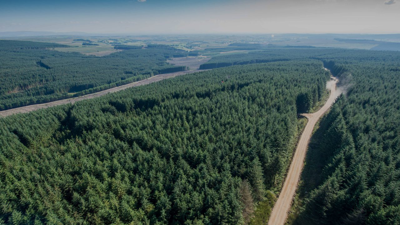 New forestry strategy oversight team confirmed at first meeting
