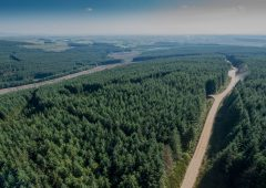 Hackett announces launch of new public portal for forestry licencing