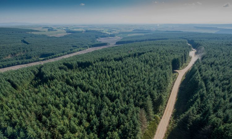 FCI calls for 'significant number' of tree felling licences
