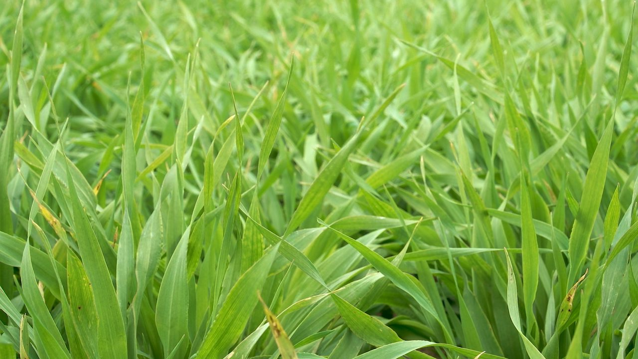 Looking at the demand for malting barley in the UK