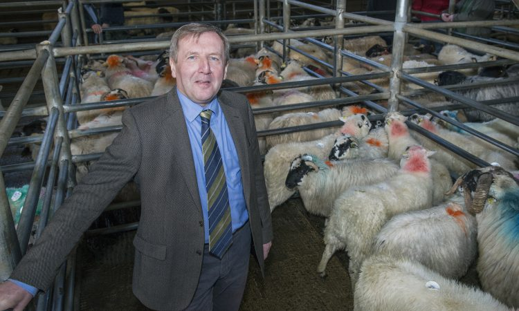 Balancing Payments for year 2 of Sheep Welfare Scheme commences
