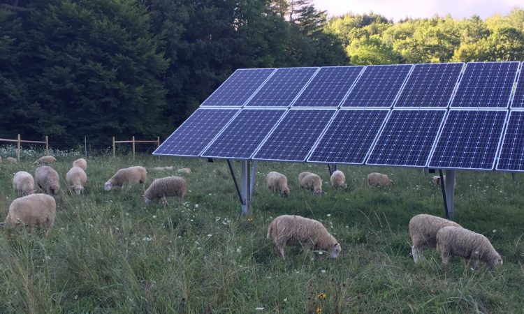 Farmers to receive 'fair price' for selling excess electricity back to the grid under new scheme