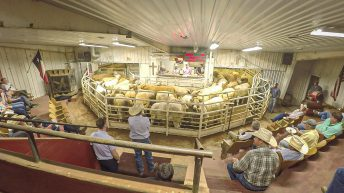 Beef focus: How a US mart selling up to 110,000 head annually operates