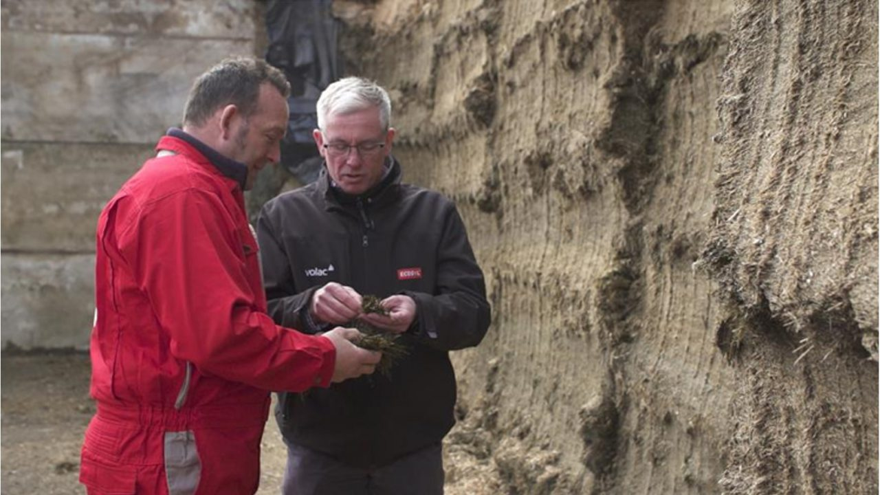 Video: Serious about making more milk from forage?