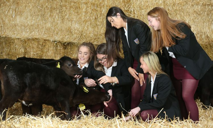 5 schools selected for latest Angus calf rearing competition