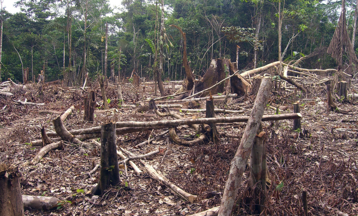 600 scientists sign petition over sustainability fears in Brazil