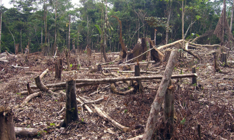 Amazon deforestation at highest level in 11 years