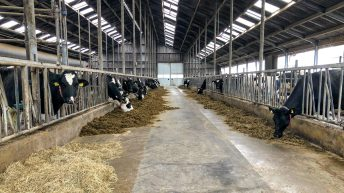 Dairy focus: Producing one million litres with one labour unit in the Netherlands