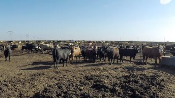 What is the carbon footprint of the entire US beef industry?