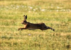 Healy-Rae: Bill to ban hare coursing 'nothing more than a publicity-seeking stunt'