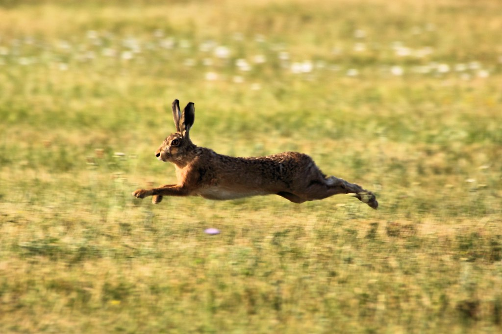 TD: Independent mandate 'ignored' as parties 'chase a Green hare'