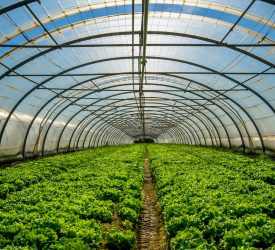 Government 'causing demise of horticulture sector'