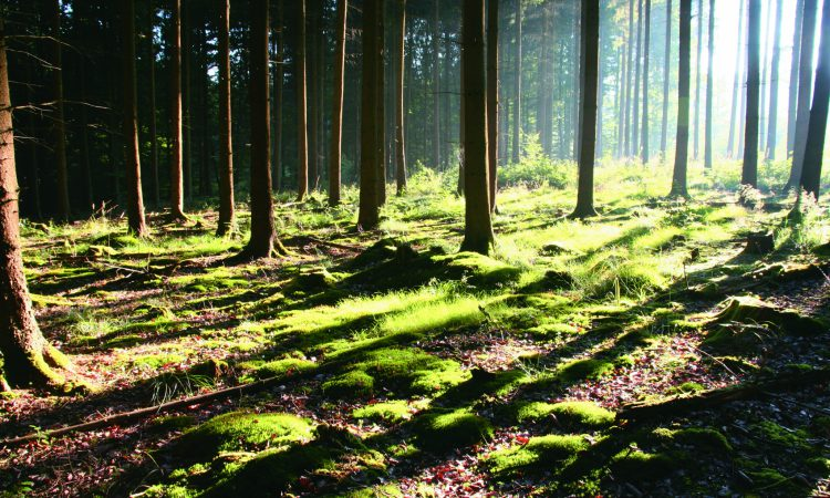 'Single largest private forestry transaction in Irish history' completed
