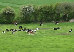 Every 1t of grass DM utilised is equal to €105 net profit/ha – DairyBEEF2019