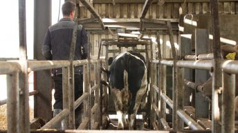 Tipping the scales: Monitoring bull, steer and heifer performance in Co. Wexford