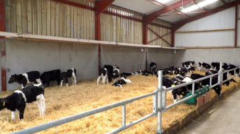 Health and calf rearing a major focus of DairyBEEF2019