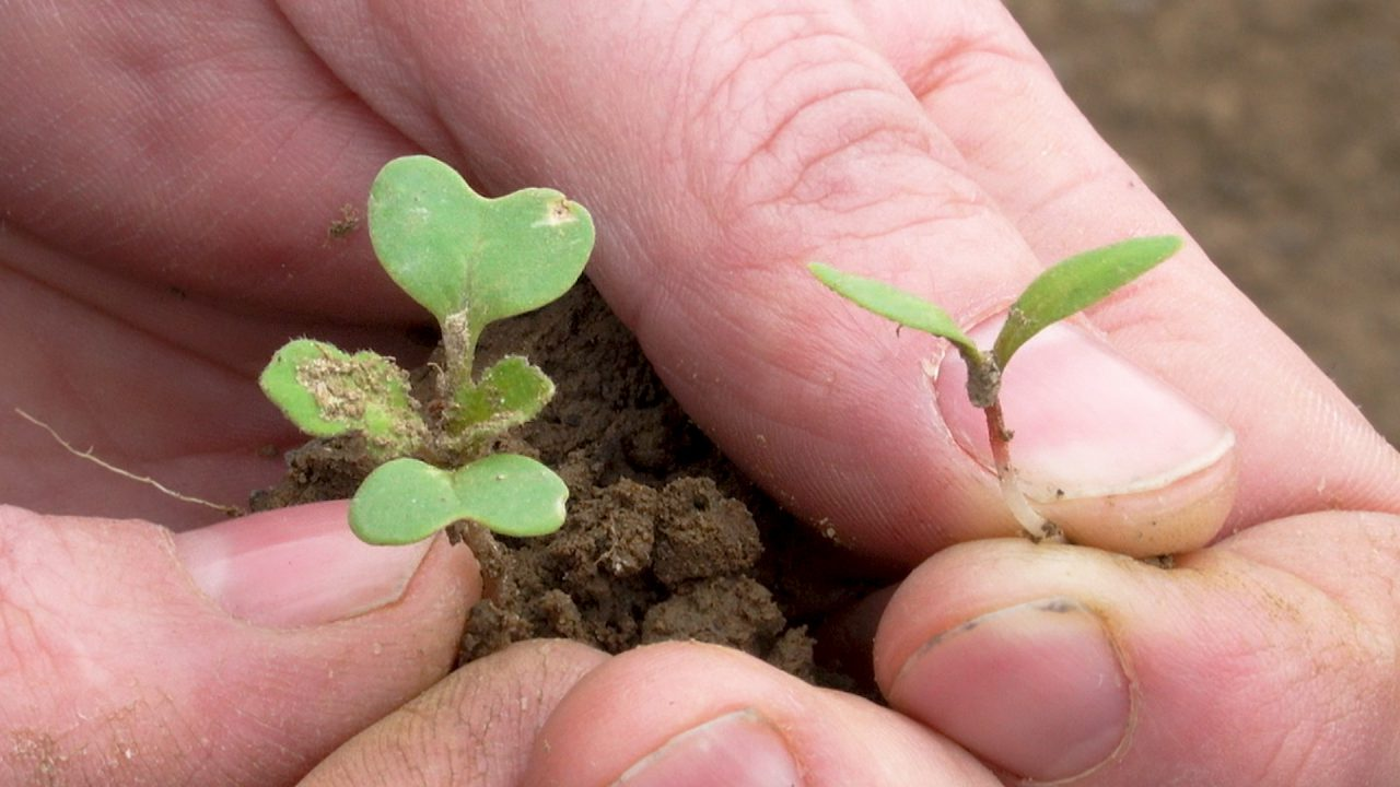 The threat of weeds now greater than at any time in human history